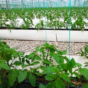 کارتن پلاست در کشاورزی 300x300 - صنعت کشاورزی