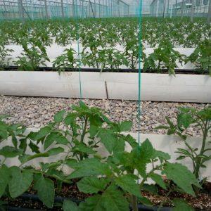 2020129 300x300 - صنعت کشاورزی