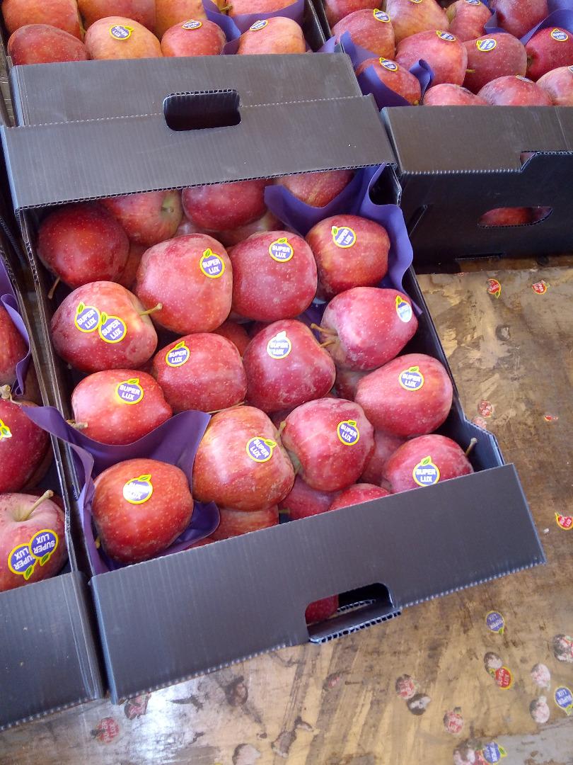 جعبه سیب 8 کیلویی