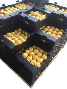 پالت بندی جعبه سیب 8 کیلیویی