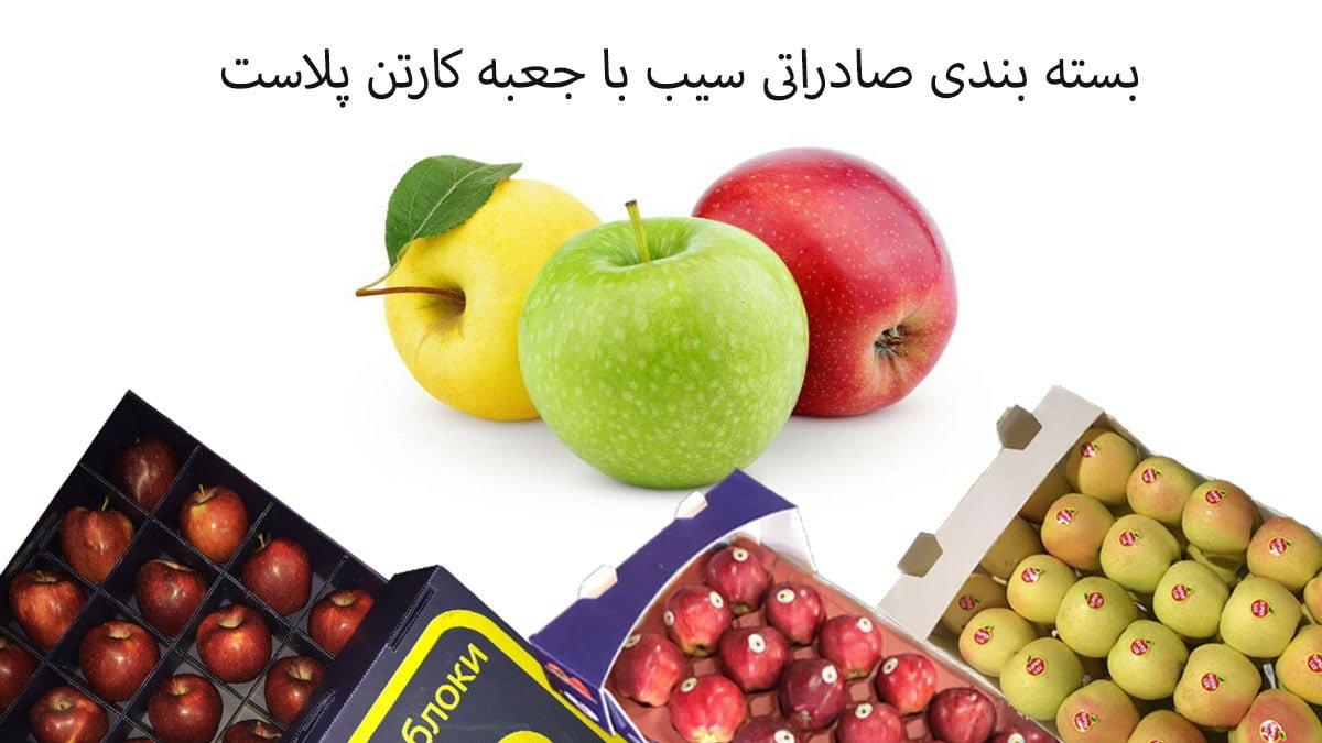 کارتن سیب درختی صادراتی